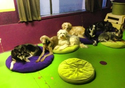 doggy daycare in vancouver
